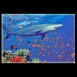 Melissa & Doug 100 Piece Shark Jigsaw Puzzle,14″L x 19″W (Assembled),Each,1360
