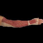 LympheDudes Phoenix Compression Arm Sleeve And Gauntlet,Each,PHOENIX
